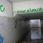 cocaiane